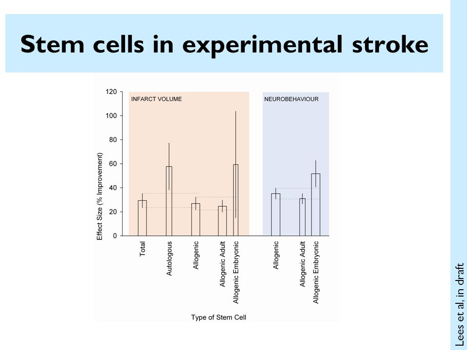 Stem cells in experimental stroke