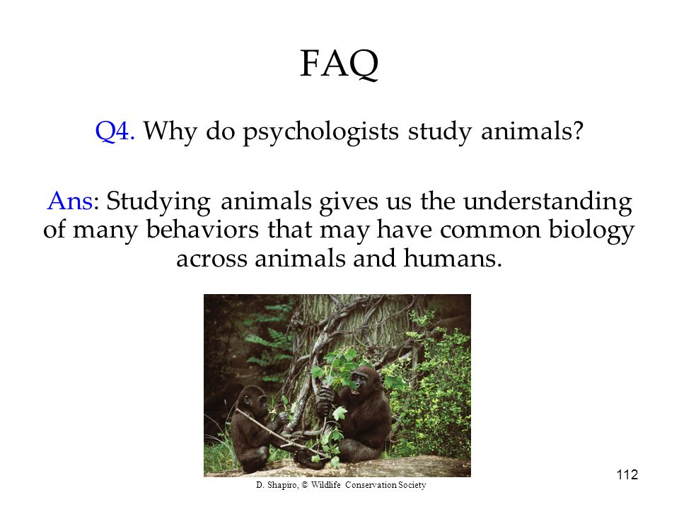 Q4. Why do psychologists study animals
