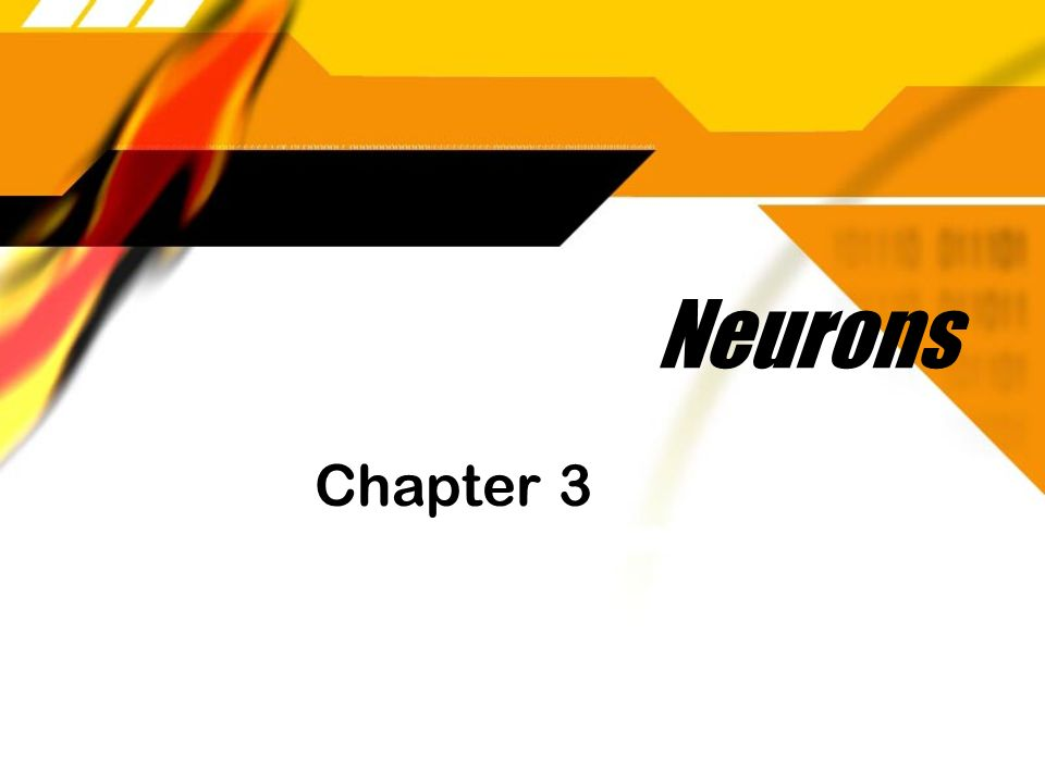 Neurons Chapter 3