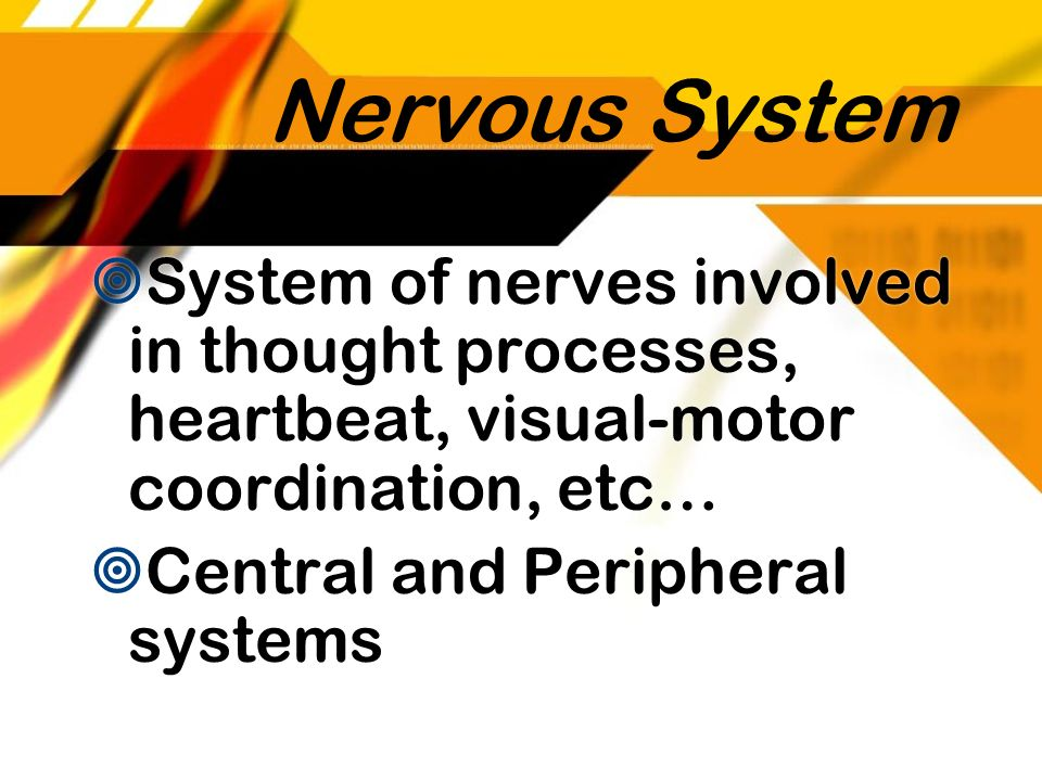 Nervous System System of nerves involved in thought processes, heartbeat, visual-motor coordination, etc…