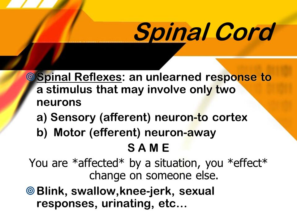 Spinal Cord Spinal Reflexes: an unlearned response to a stimulus that may involve only two neurons.