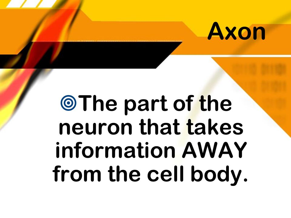 The part of the neuron that takes information AWAY from the cell body.