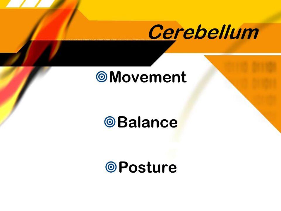 Cerebellum Movement Balance Posture