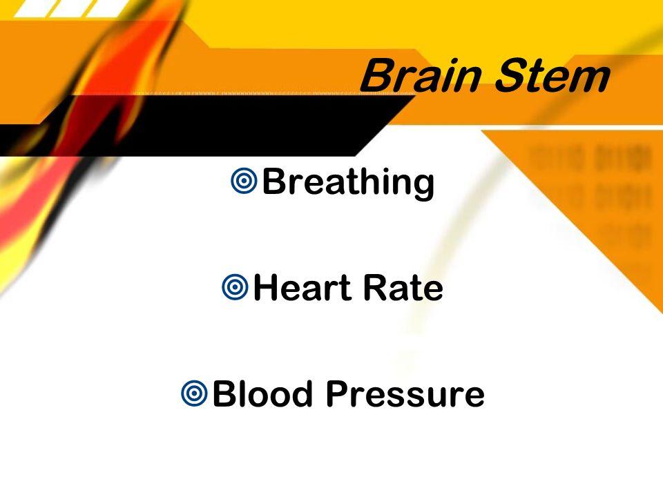 Brain Stem Breathing Heart Rate Blood Pressure