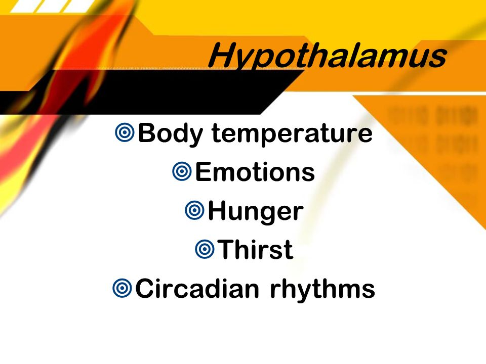 Hypothalamus Body temperature Emotions Hunger Thirst Circadian rhythms
