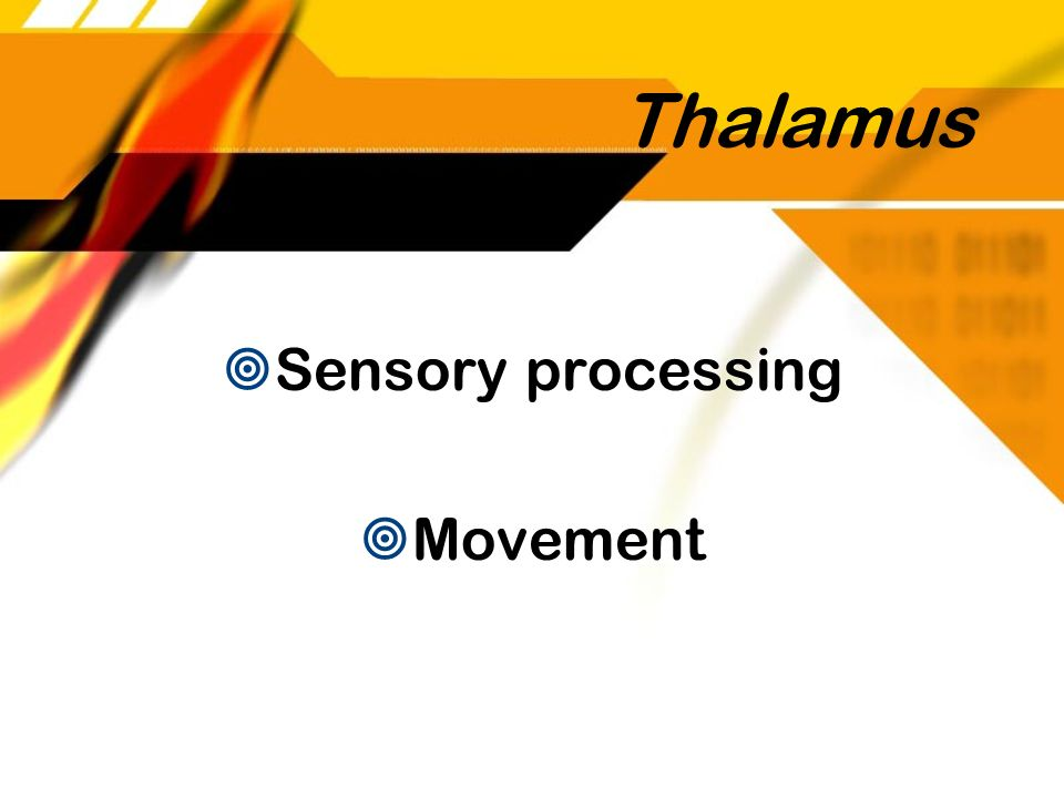 Thalamus Sensory processing Movement