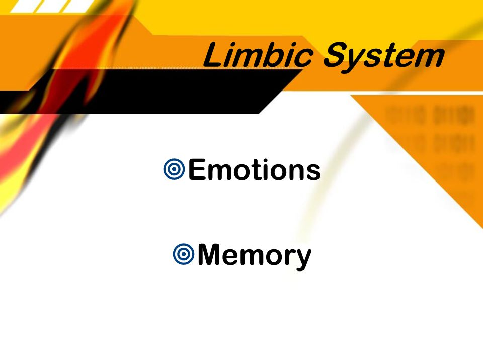 Limbic System Emotions Memory