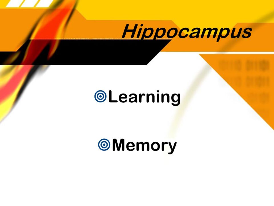 Hippocampus Learning Memory
