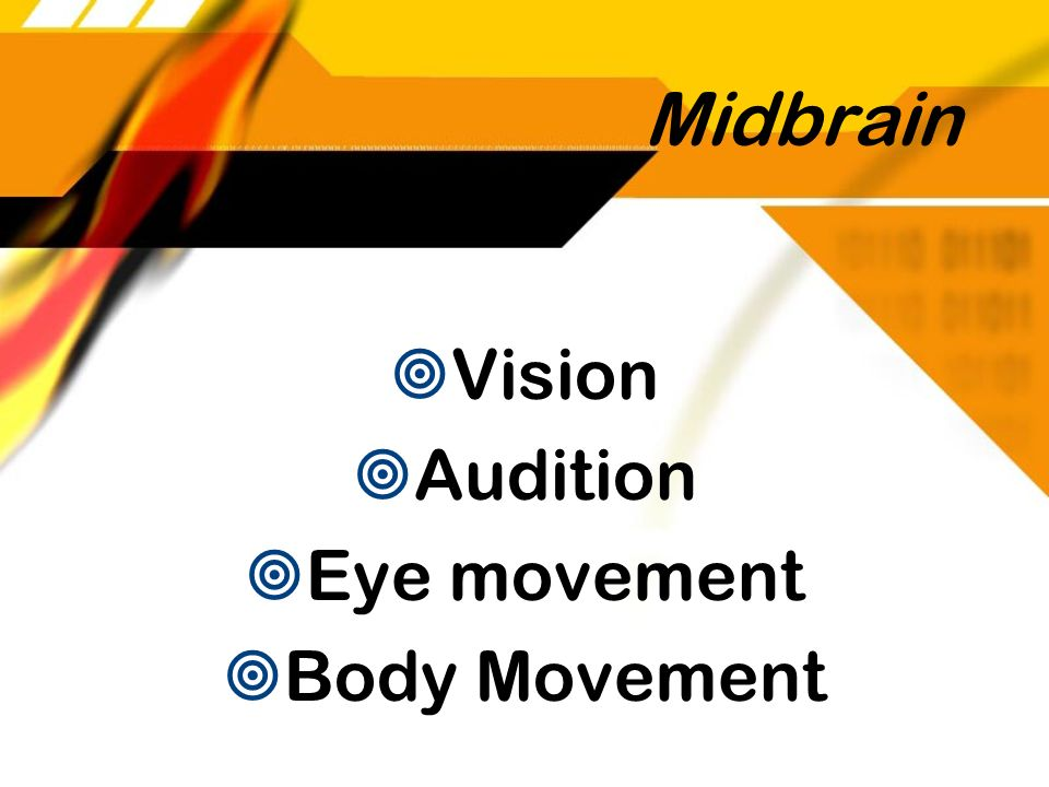 Midbrain Vision Audition Eye movement Body Movement