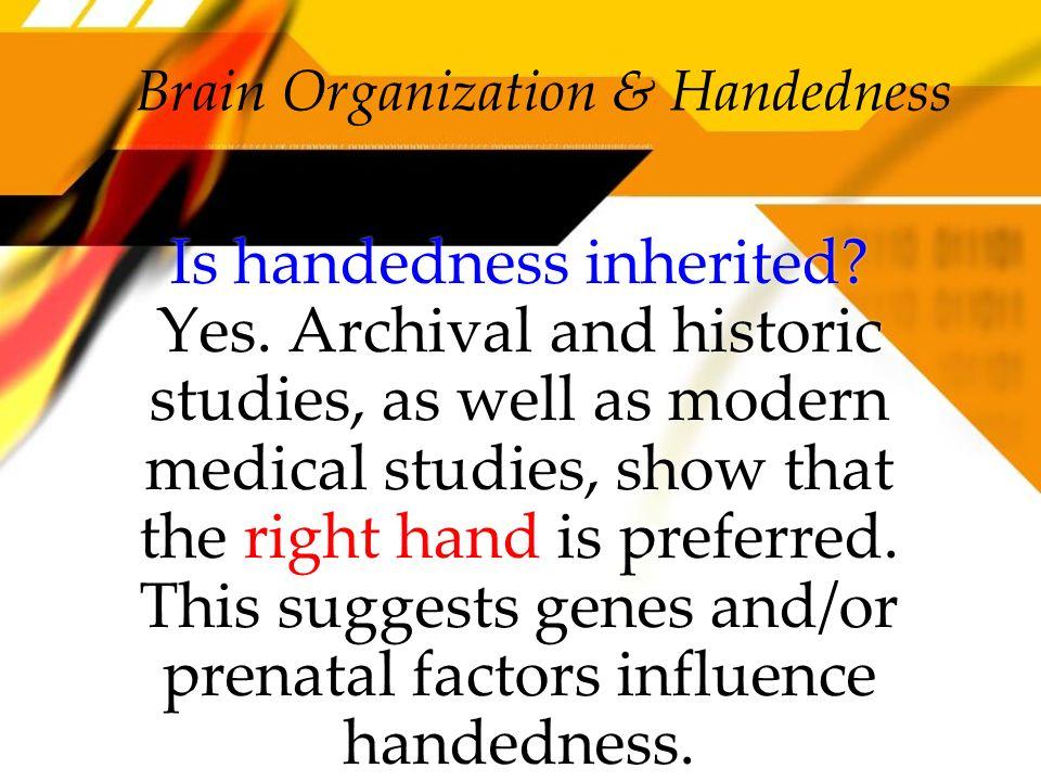 Brain Organization & Handedness