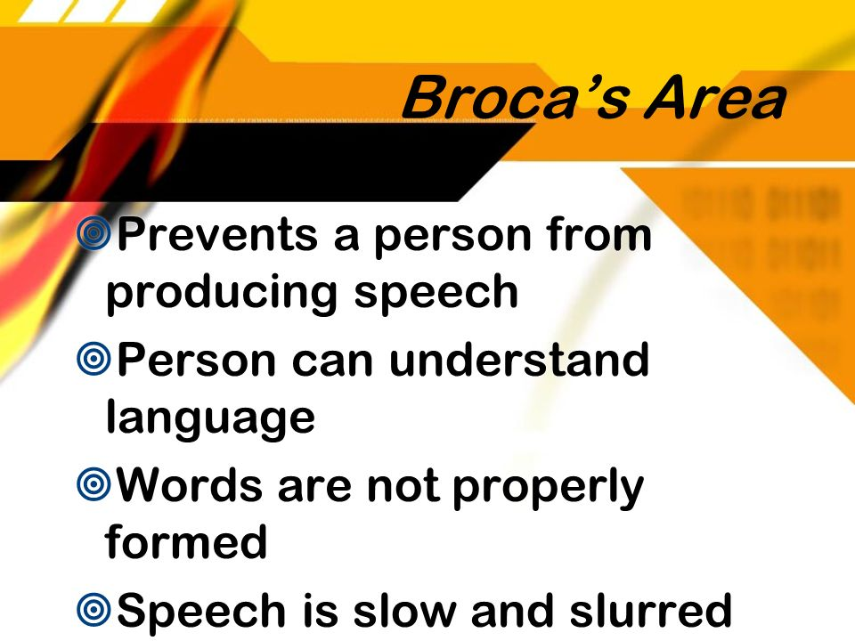 Broca's Area Prevents a person from producing speech