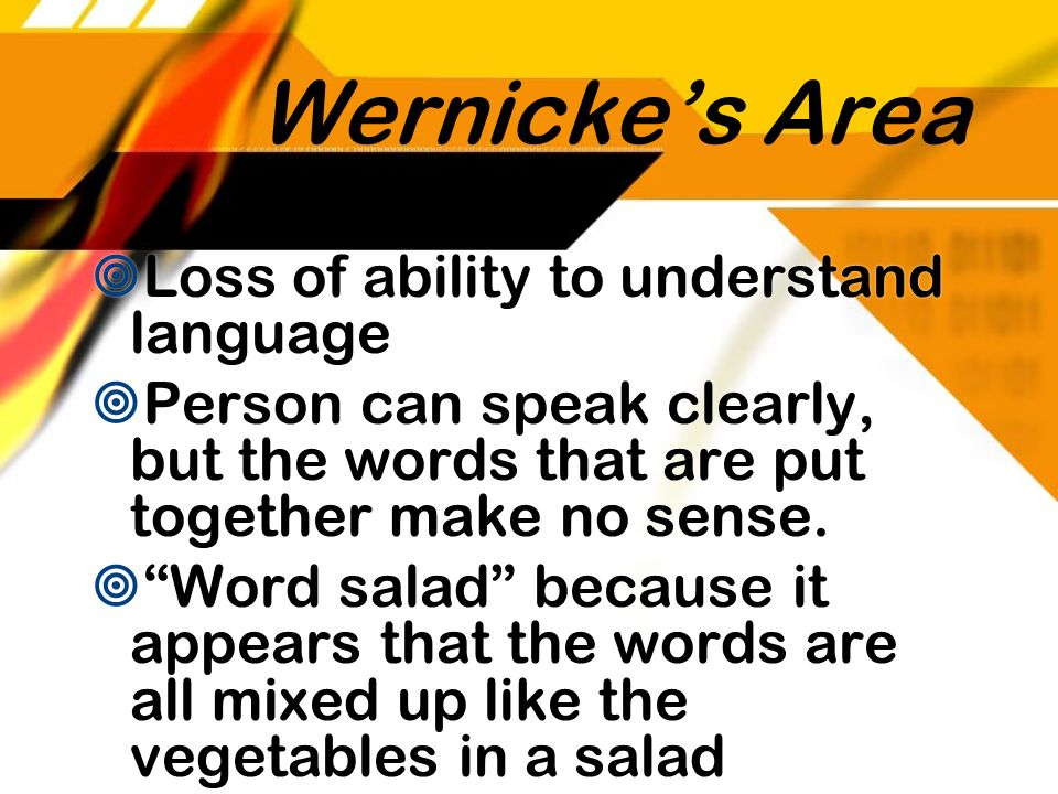Wernicke's Area Loss of ability to understand language