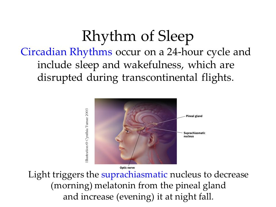 Rhythm of SleepCircadian Rhythms occur on a 24-hour cycle and include sleep and wakefulness, which are disrupted during transcontinental flights.