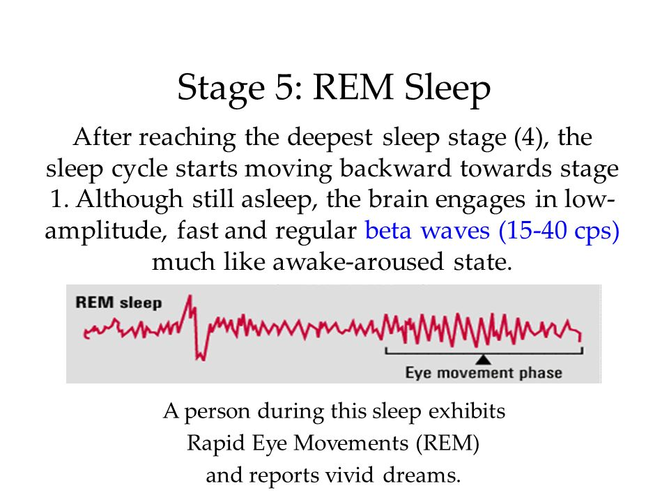 Stage 5: REM Sleep