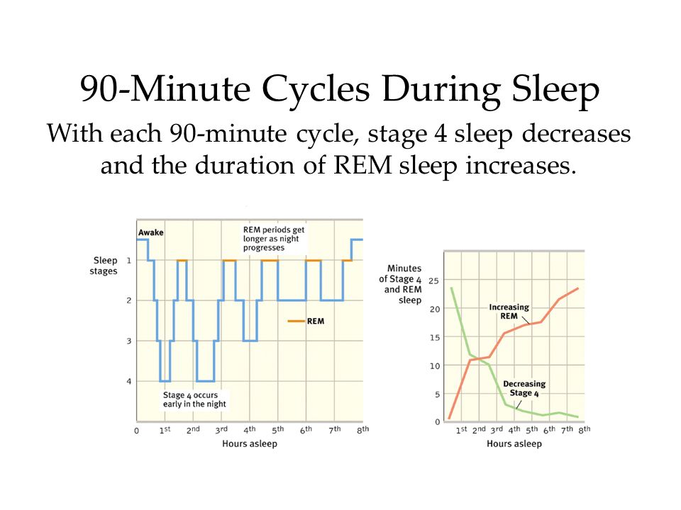 90-Minute Cycles During Sleep