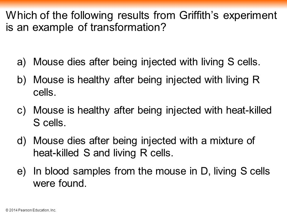 Which of the following results from Griffith's experiment is an example of transformation