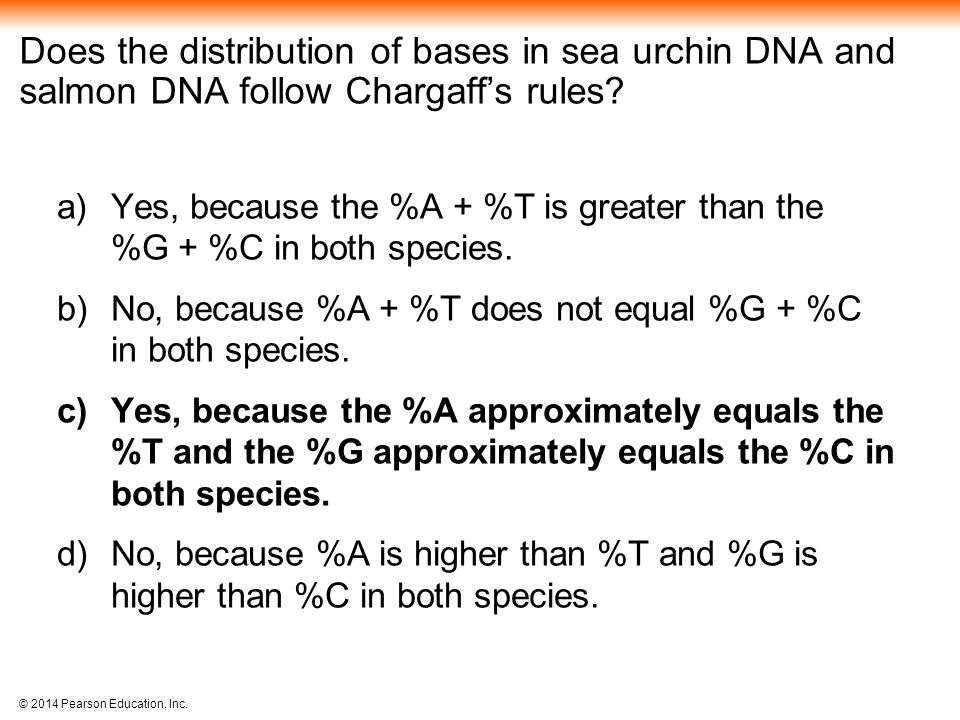 Does the distribution of bases in sea urchin DNA and salmon DNA follow Chargaff's rules