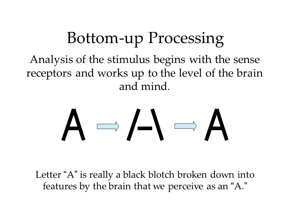 Bottom-up ProcessingAnalysis of the stimulus begins with the sense receptors and works up to the level of the brain and mind.