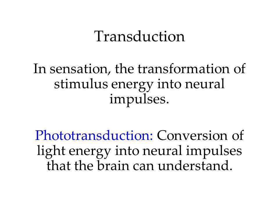 TransductionIn sensation, the transformation of stimulus energy into neural impulses.