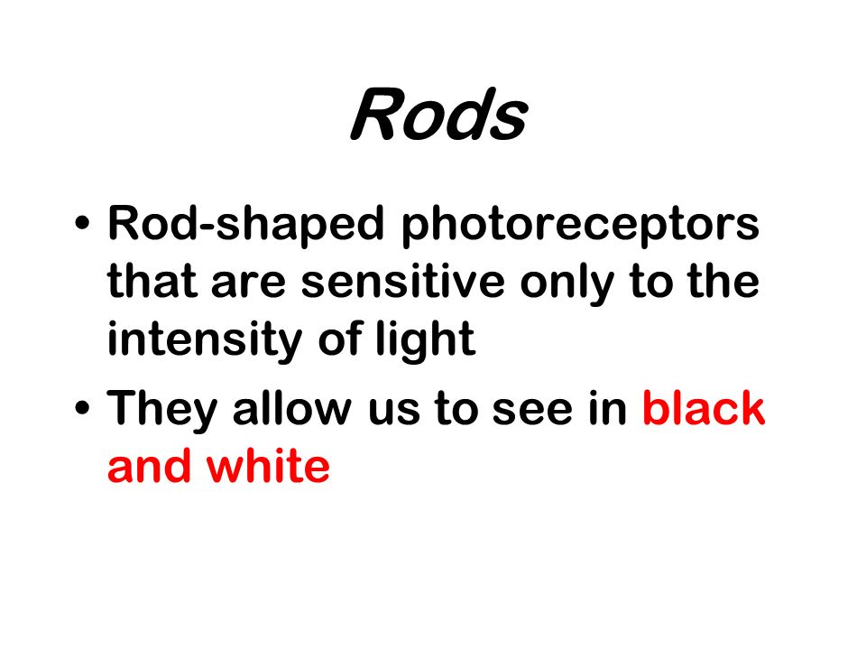 Rods Rod-shaped photoreceptors that are sensitive only to the intensity of light.