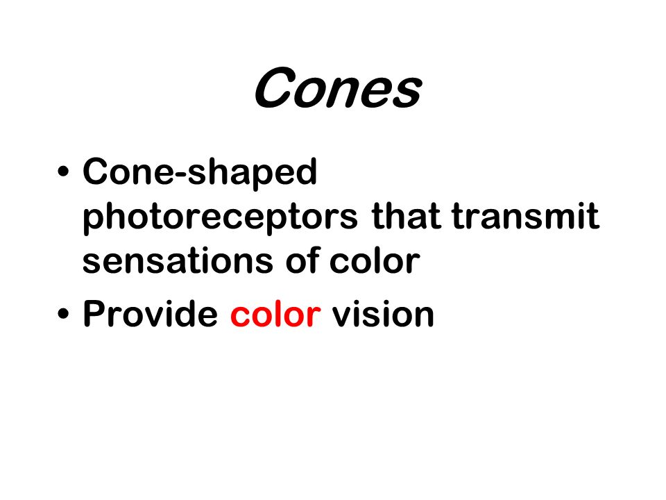 Cones Cone-shaped photoreceptors that transmit sensations of color