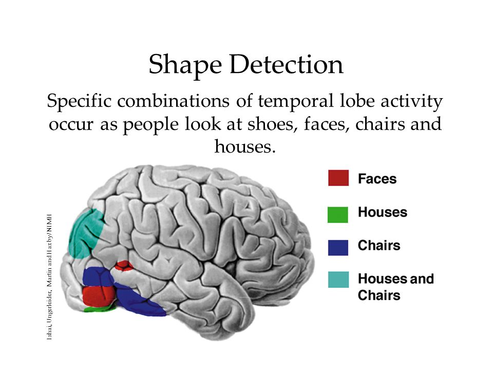 Shape Detection Specific combinations of temporal lobe activity occur as people look at shoes, faces, chairs and houses.