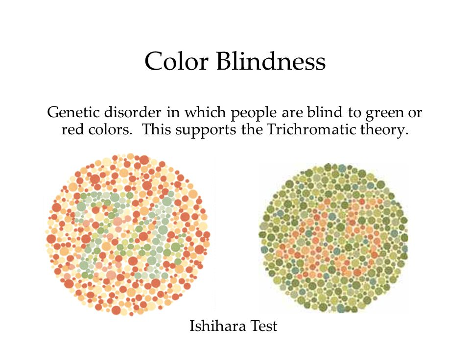 Color BlindnessGenetic disorder in which people are blind to green or red colors. This supports the Trichromatic theory.