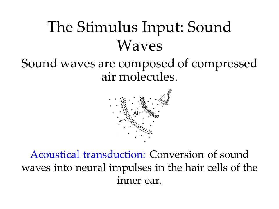 The Stimulus Input: Sound Waves