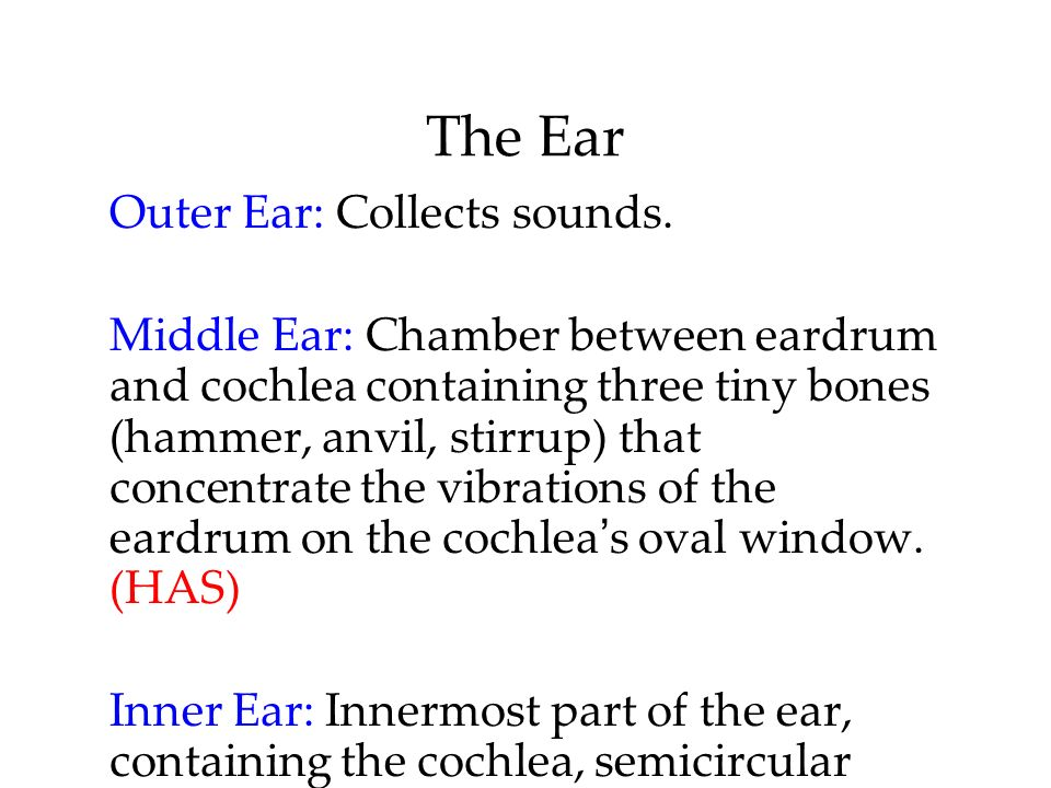 The Ear Outer Ear: Collects sounds.