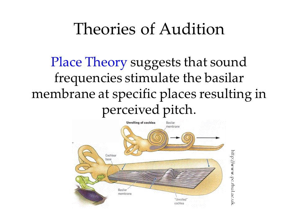 Theories of AuditionPlace Theory suggests that sound frequencies stimulate the basilar membrane at specific places resulting in perceived pitch.