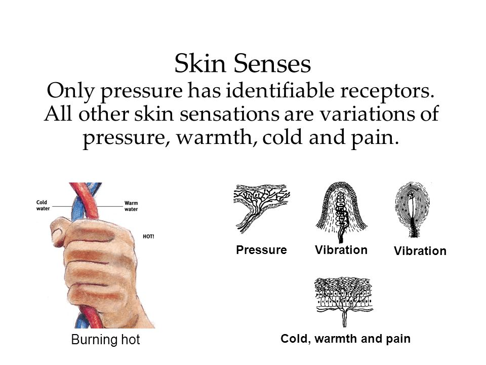 Skin SensesOnly pressure has identifiable receptors. All other skin sensations are variations of pressure, warmth, cold and pain.
