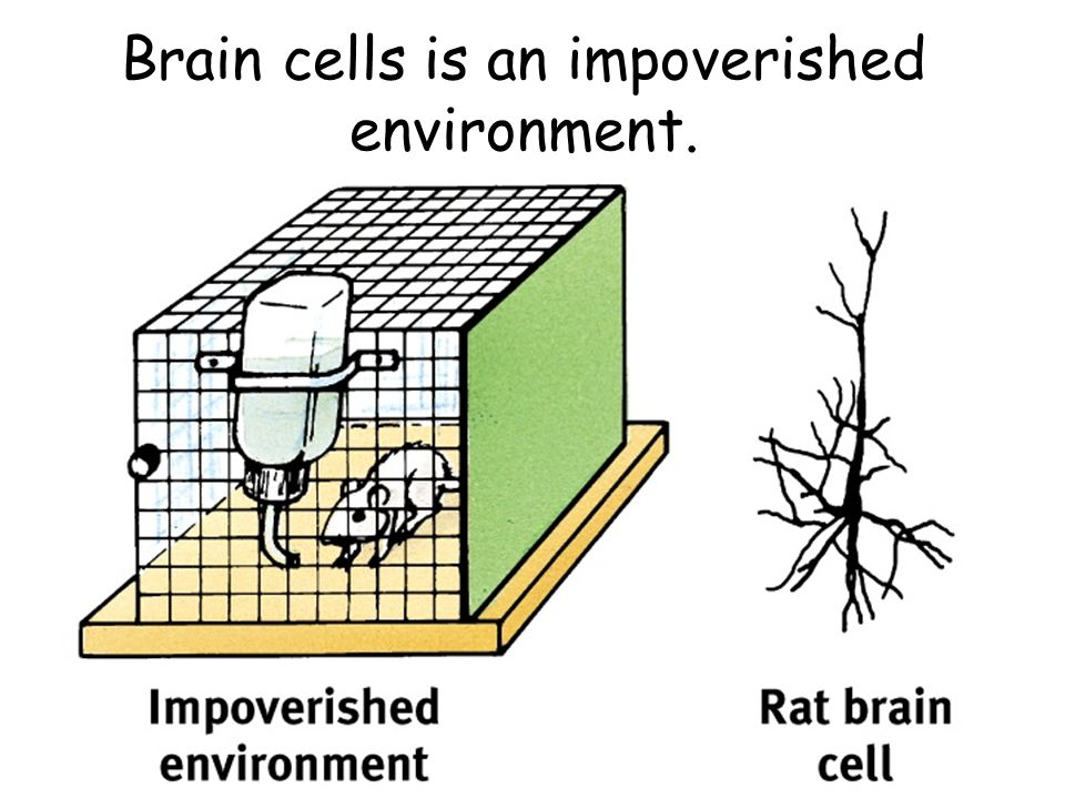 Brain cells is an impoverished environment.