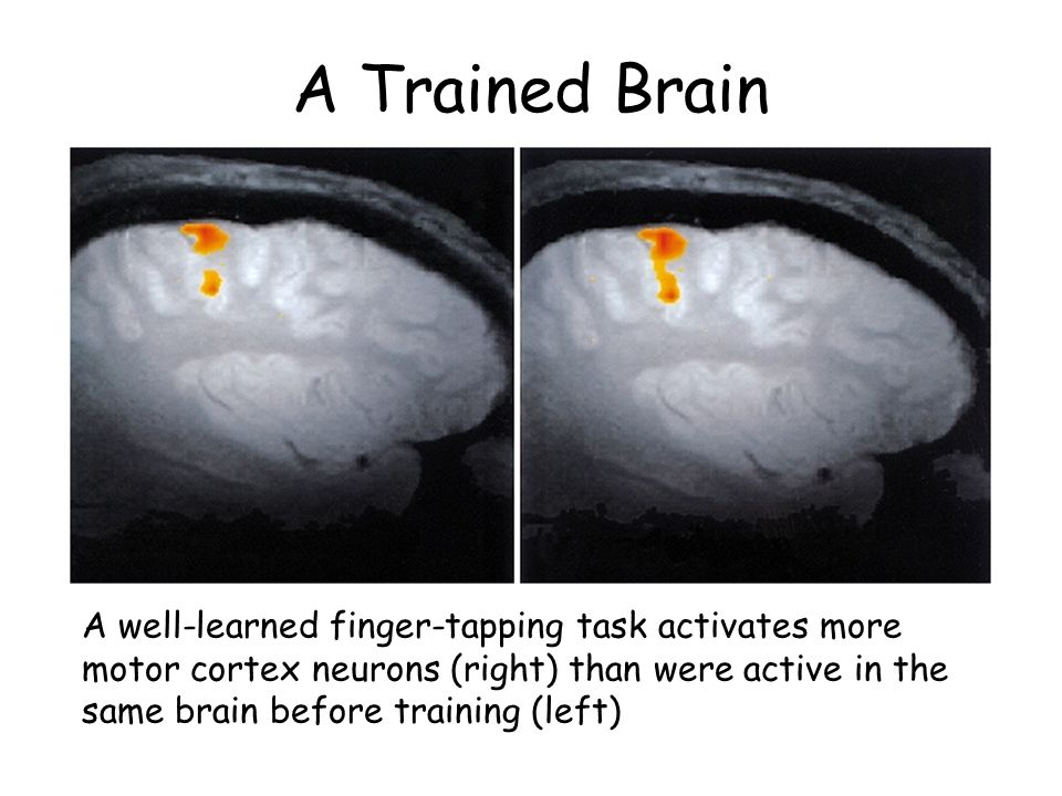A Trained Brain