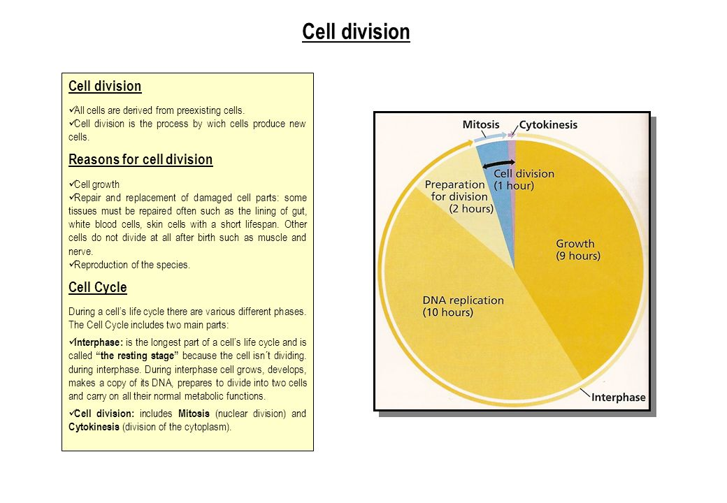 Cell division Cell division Reasons for cell division Cell Cycle