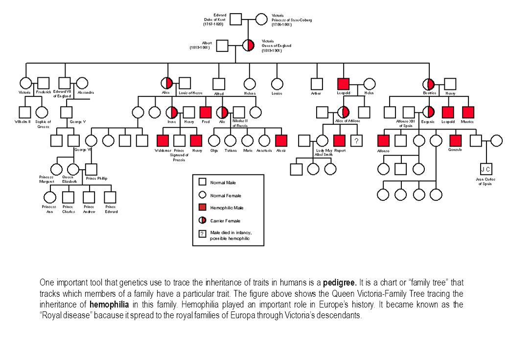 One important tool that genetics use to trace the inheritance of traits in humans is a pedigree.