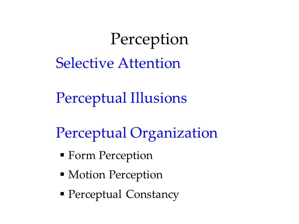 Perception Selective Attention Perceptual Illusions