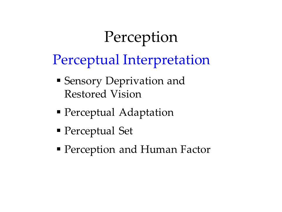 Perception Perceptual Interpretation