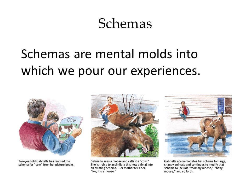 Schemas Schemas are mental molds into which we pour our experiences.
