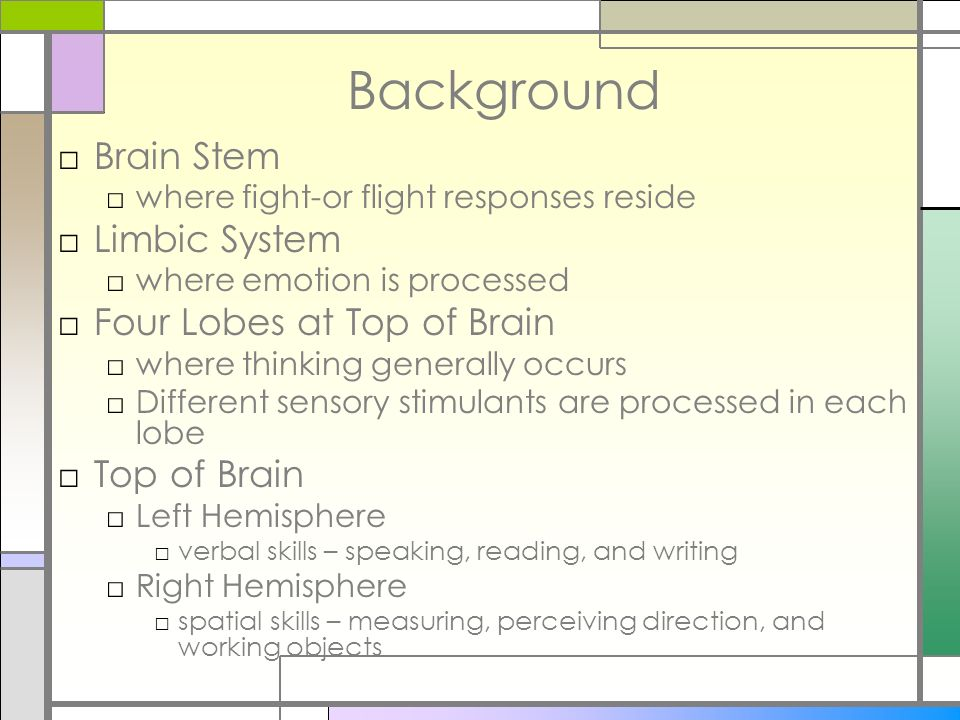 Background Brain Stem Limbic System Four Lobes at Top of Brain