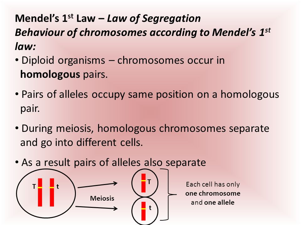 The positioning of chromosomes during cell