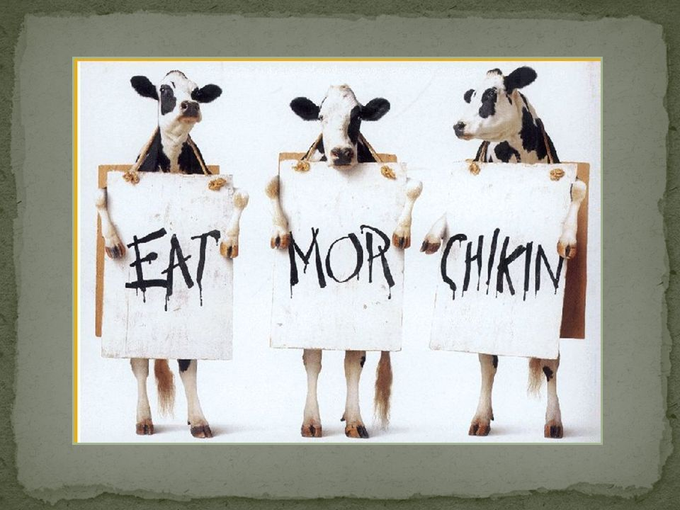 Simple approach, according to these bovines