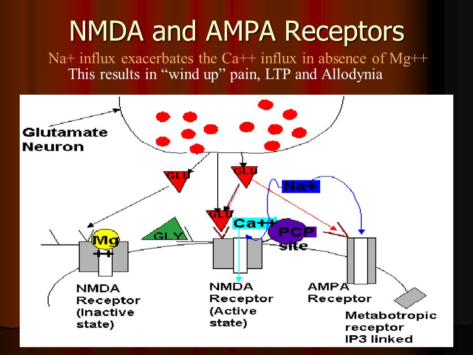 NMDA and AMPA Receptors