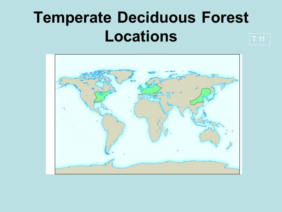 temperate deciduous forest and missouri essay Temperate deciduous forest and missouri essay recorded in missouri (missouri facts and trivia) the temperate deciduous forest is home to unique ecosystems and plentiful wildlife and vegetation.