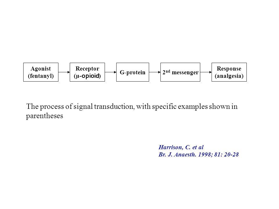 Agonist (fentanyl) Receptor (μ-opioid) G-protein. 2nd messenger. Response (analgesia)