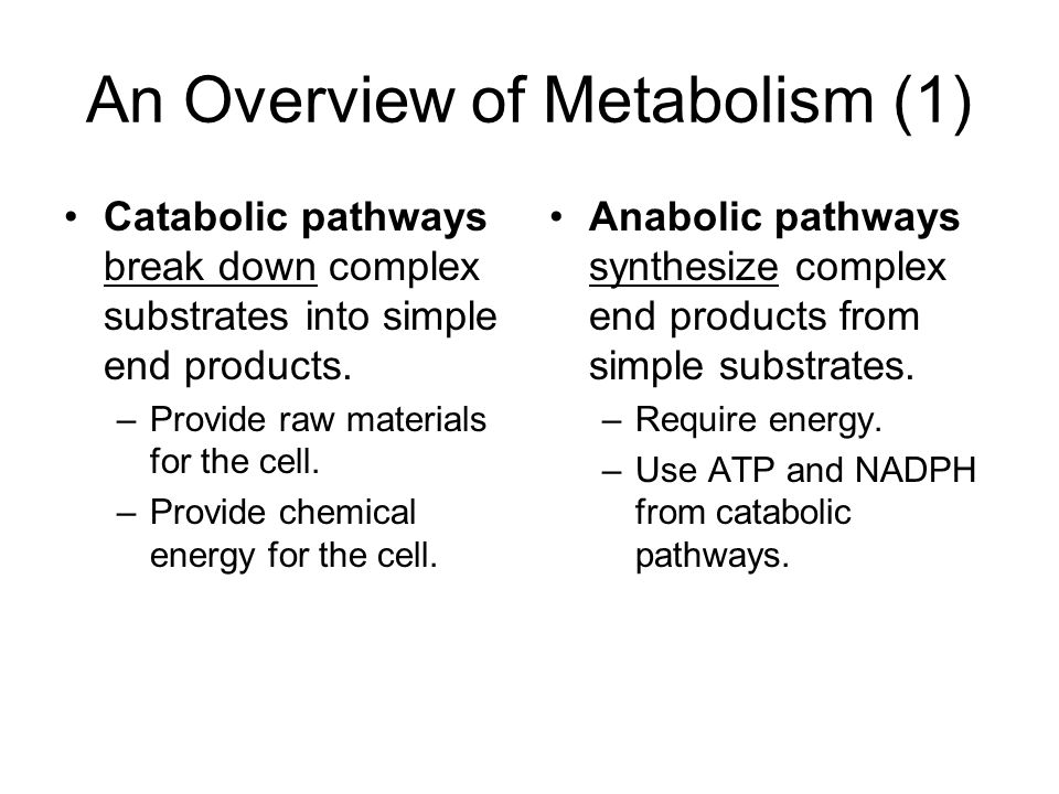 metabolism and energy catabolism and anabolism essay Metabolism – acetyl coenzyme a and pyruvate metabolism involves two processes, catabolism and anabolism catabolism is energy.