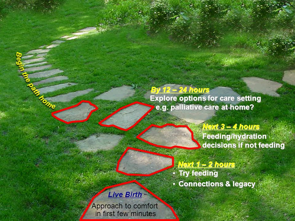 Begin the path home By 12 – 24 hours. Explore options for care setting e.g. palliative care at home
