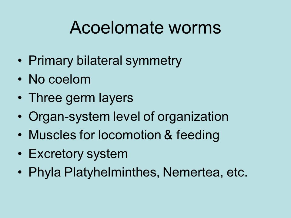 Acoelomate worms Primary bilateral symmetry No coelom