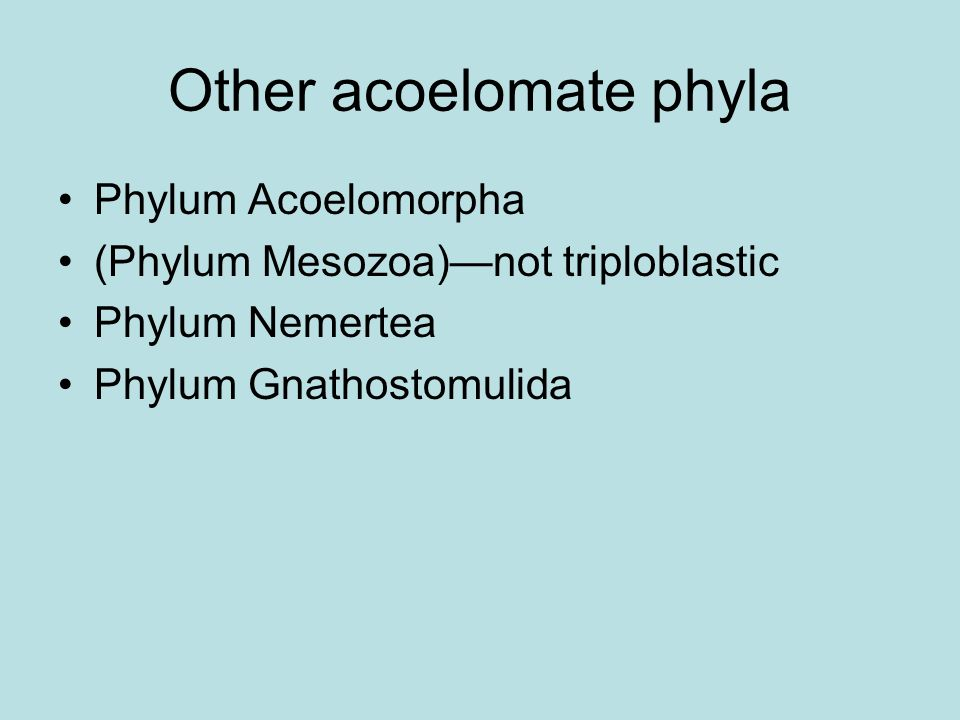 Other acoelomate phyla