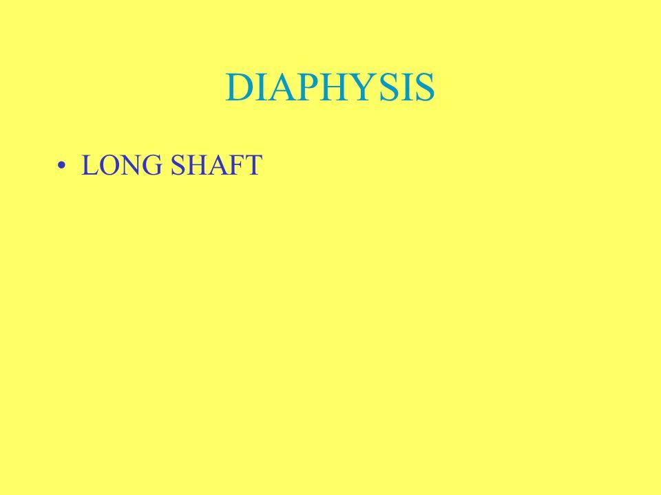 DIAPHYSIS LONG SHAFT