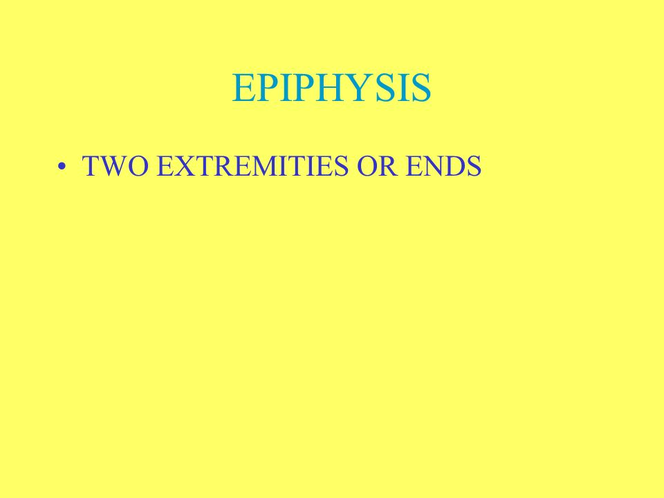 EPIPHYSIS TWO EXTREMITIES OR ENDS
